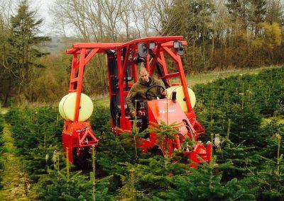Hole Park Christmas Trees, Rolvenden, Kent.
